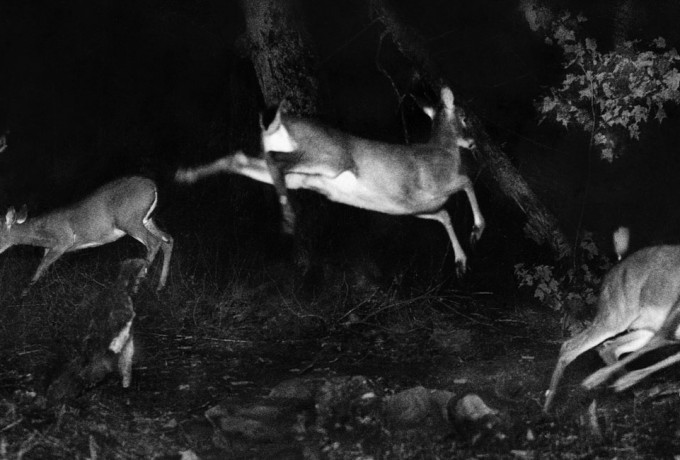 "Alfred Ehrhardt Stiftung | Lichtbildervortrag Sonia Voss ""Hunting Wild Life With Camera And Flashlight. George Shiras (1859-1942), Pionier Der Wildlife Photography"""