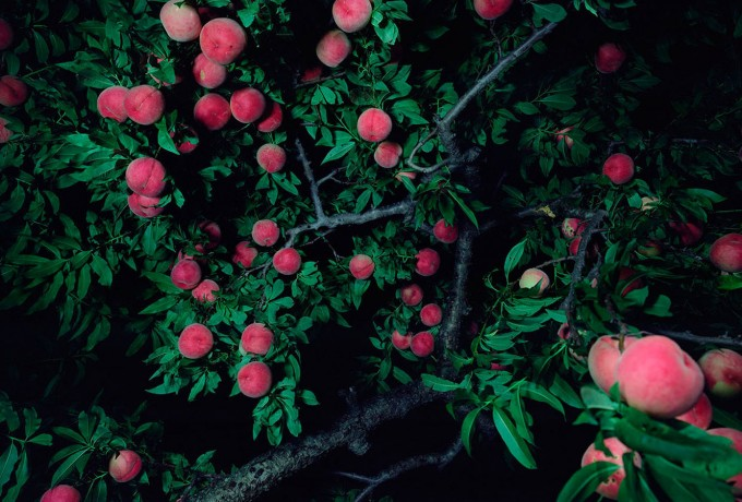 Loock Galerie | Miwa Yanagi »The Goddess And The God Separate Under The Peach Tree«