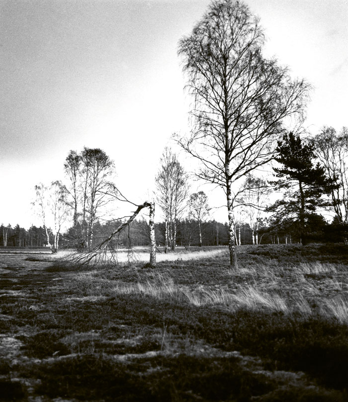 Bergen-Belsen 1992, From The Series Memorials, 1992 © Henning Langenheim | Akg-images