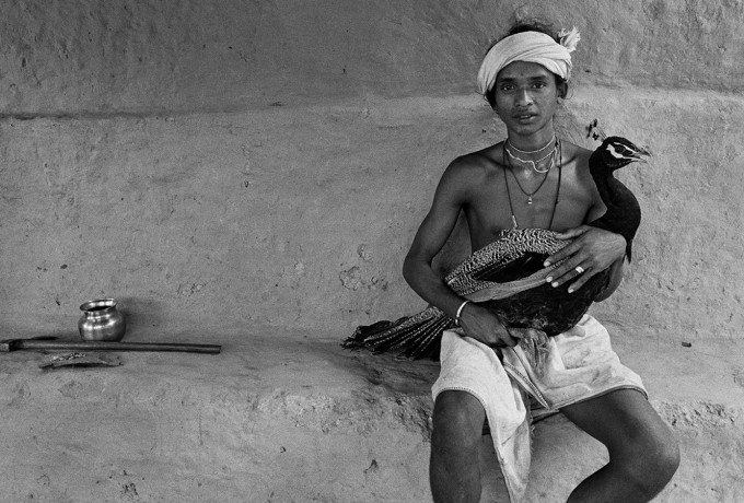 Under The Mango Tree | »Indian Storytellers«