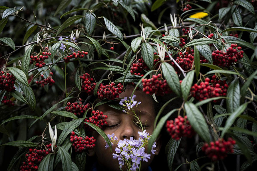 """""""My Son Luis Is Hiding With A Bunch Of Spring Flowers In A Rowanberry Shrub"""" © Anne Ackermann / The Journal Collective"""