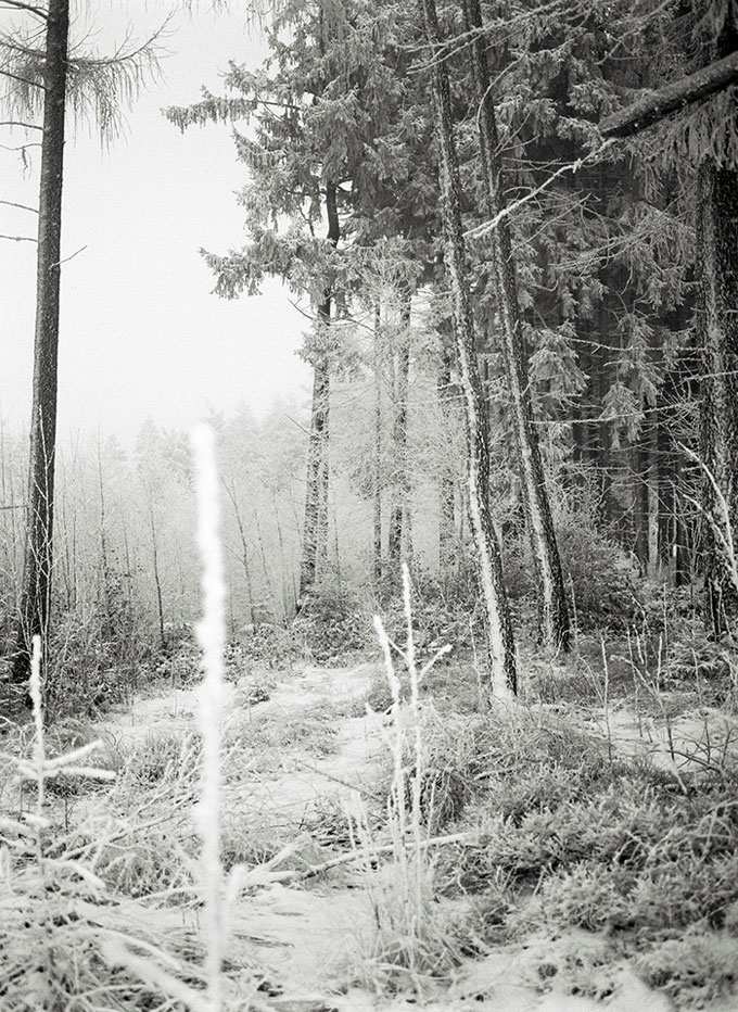 Wald © Andreas Machate
