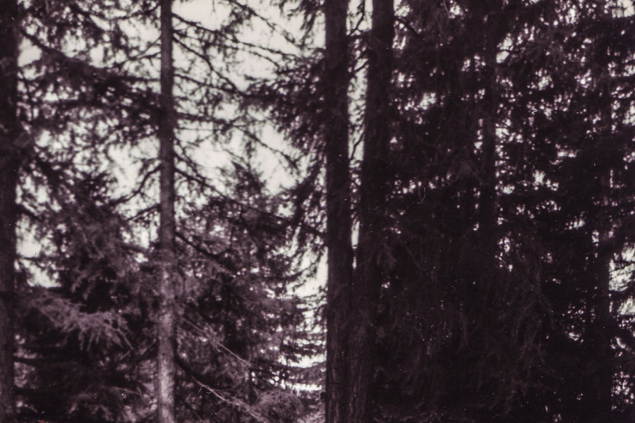 #archive4, From The Series Are There Trees Back In Berlin? © Martina Zaninelli