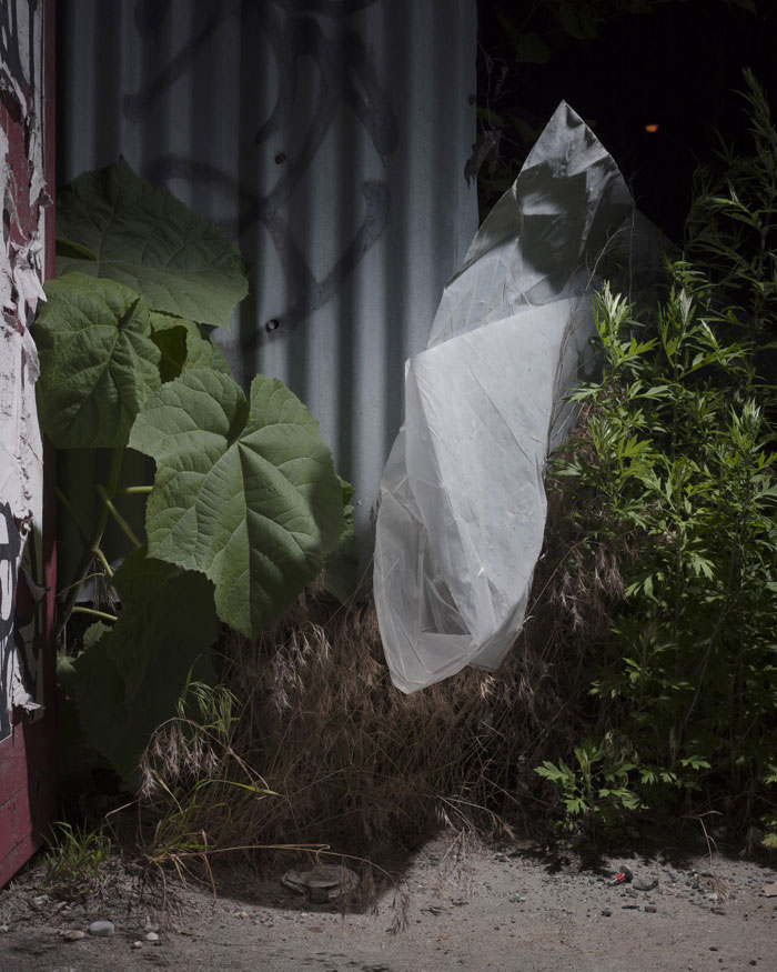 Michael Vahrenwald, Untitled #2, From The Series Forest Floor, Brooklyn NY 2016 © Michael Vahrenwald